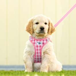 Curli Vest Harness Puppy Set
