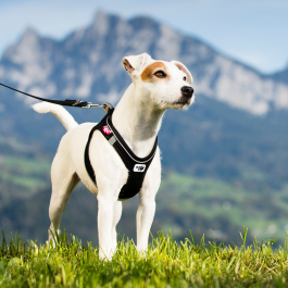Curli Magnetic Vest Harness