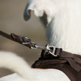 Curli Basic Leash